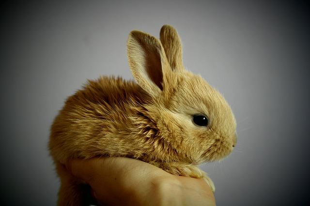 mini králíček